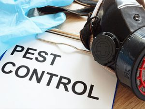 Pest Control Panama City FL