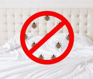 Bug Company Companies