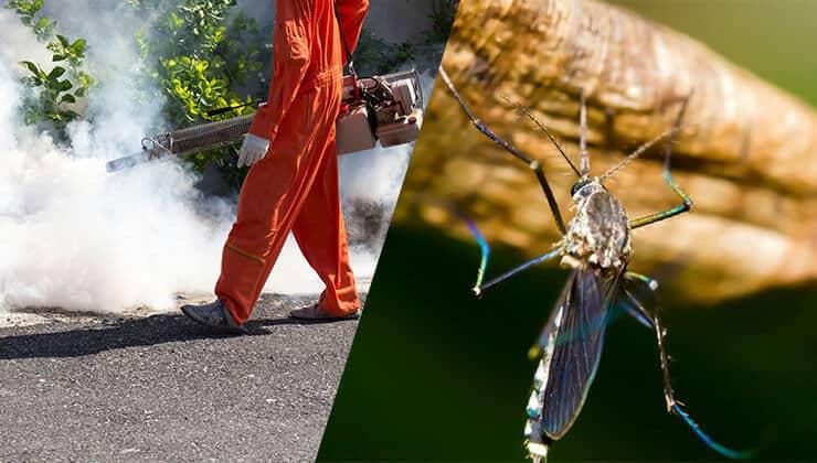 mosquito fumigation