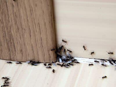 Pest Control Florence AL