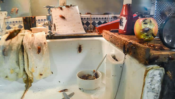 Signs of Roach infestation: Preventive Methods