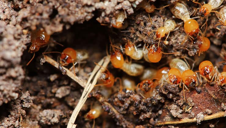How to Get Rid of Termites: A Quick Guide