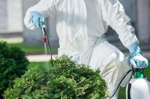 Pest Control Ann Arbor MI