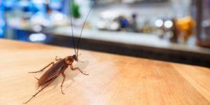 Pest Control Burleson TX