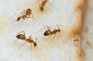 Pest Control Burlingame CA