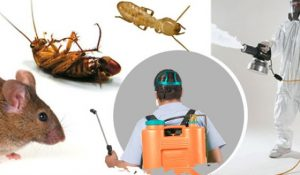 Pest Control Colonial Heights VA