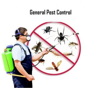 Pest Control Davis CA