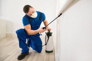 Pest Control Edgewater FL