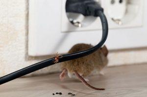 Pest Control Edmonds WA