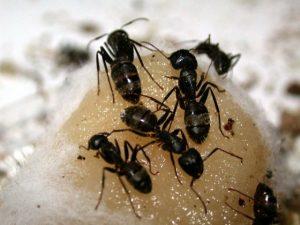 Pest Control El Dorado Hills CA
