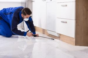 Pest Control Fort Collins CO