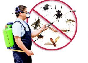 Pest Control Fullerton CA