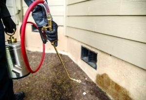 Pest Control Los Banos CA