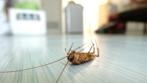 Pest Control New Rochelle NY