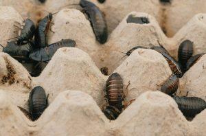 Pest Control Newbury Park CA