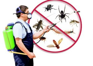 Pest Control North Highlands CA