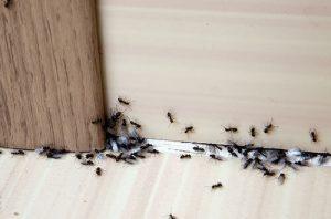 Pest Control Ottawa IL