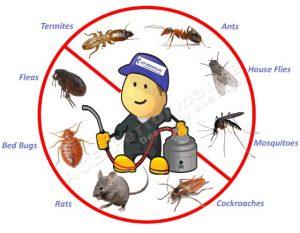 Pest Control Paramount CA
