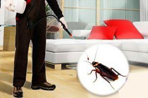 Pest Control Rosamond CA