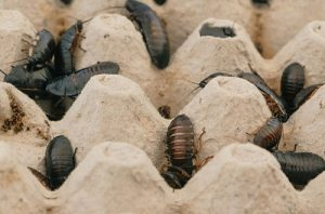 Pest Control San Fernando CA