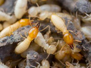 Pest Control Schererville IN