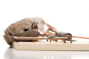 Pest Control Woodhaven NY