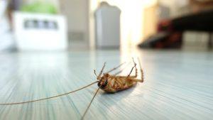 Pest Control Ypsilanti MI