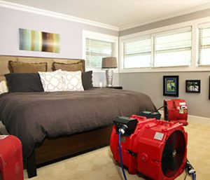 form of heat treatment for bed bugs