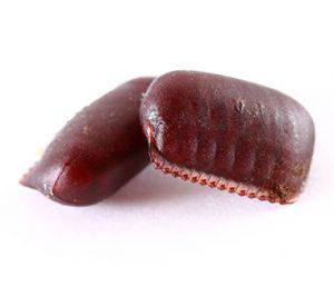 Roaches Eggs