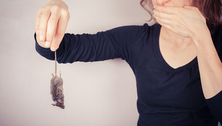 How to Get Rid of Dead Mouse Smell: 4 Simple Tips